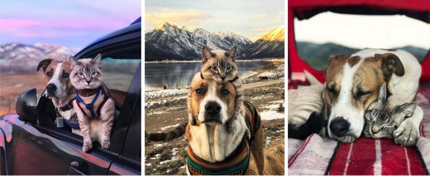 Najsłodsza para podróżników! Pies Henry i kot Baloo – ZDJĘCIA